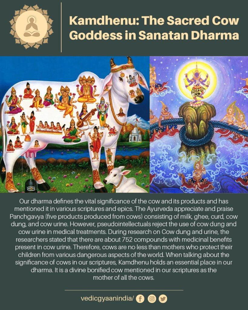 kamdhenu-the-sacred-and-pure-cow-mother